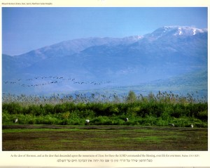 Mt. Hermon, the highest mountain in Israel at 9232 feet