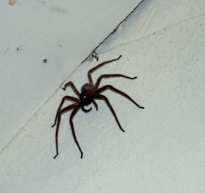 Tarantulas as big as my palm were over my bed all night!